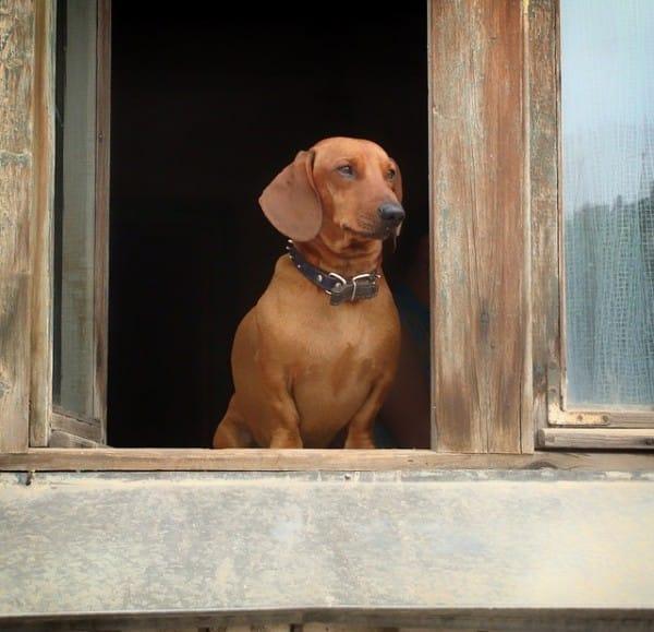 9 regole per una casa a prova di cucciolo