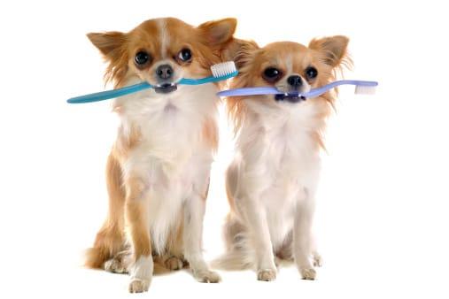 5  consigli per mantenere puliti i denti dei cani a costo zero