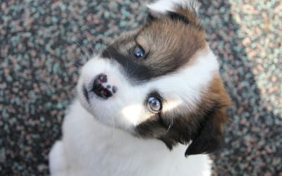 Un cucciolo arriva a casa tua!