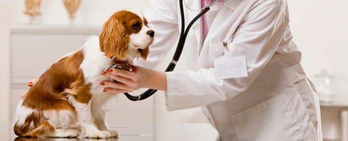Segnali di disturbi gastrointestinali del cane